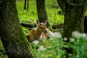 forest deer holiday