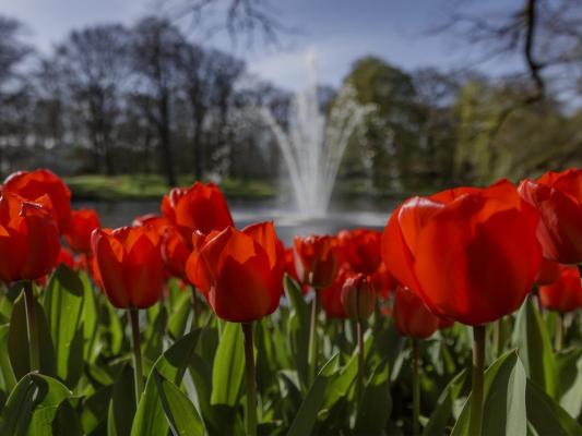 Keukenhof - red tulips