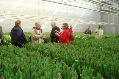 Tulip Excursion